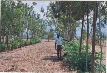 agroforesty in progetti di cooperazione internazionale